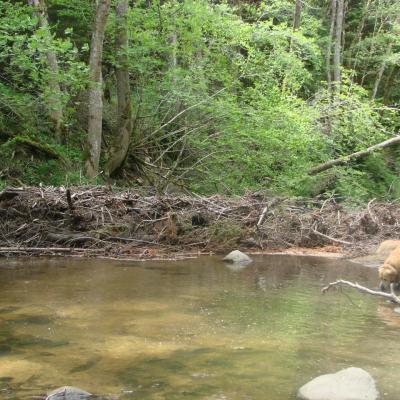 Visite technique de la rivière AUZE le 21/05/2014
